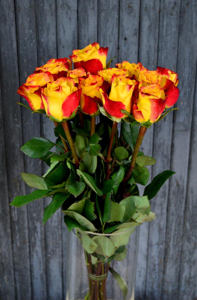 Розы (импорт), красно-оранжевые