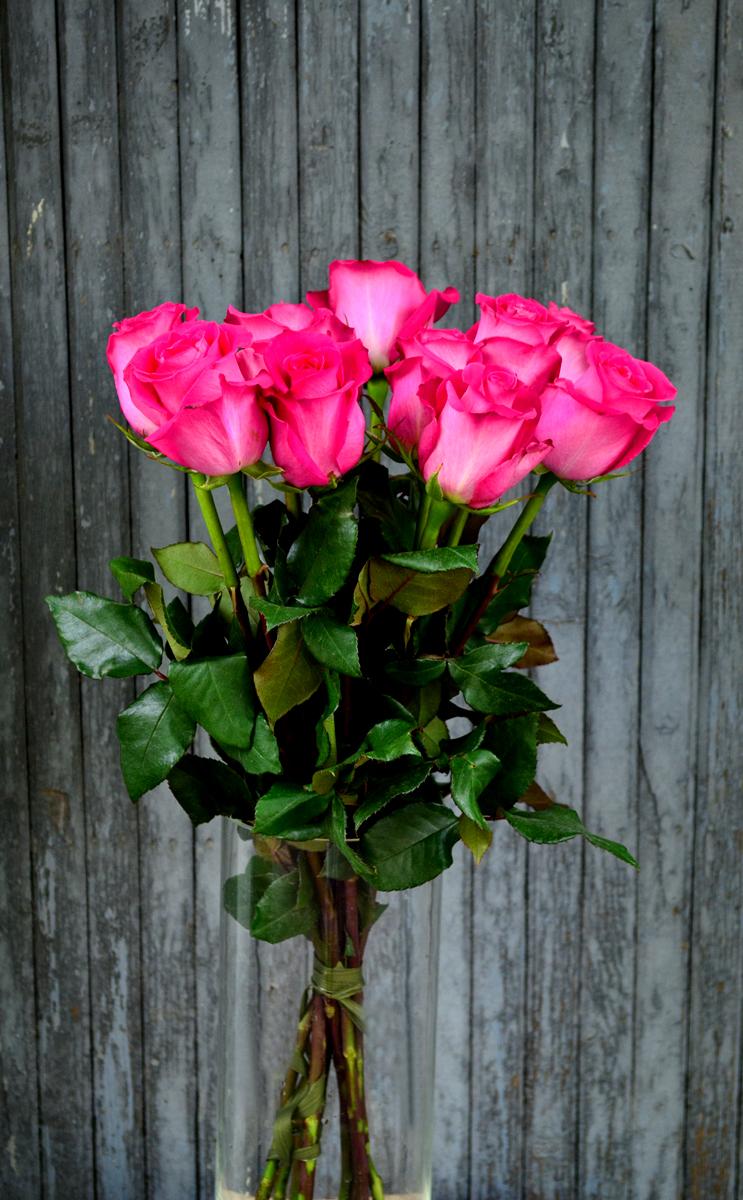 Розы (импорт), розовые