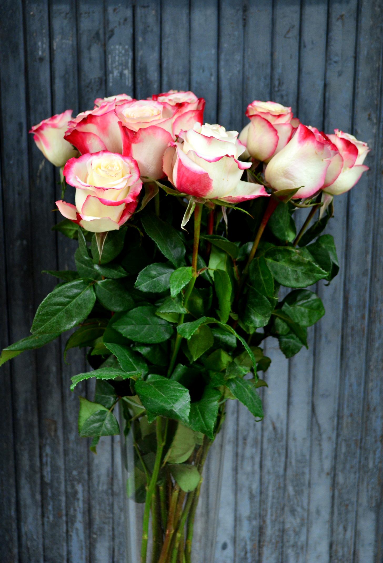 Розы (импорт),