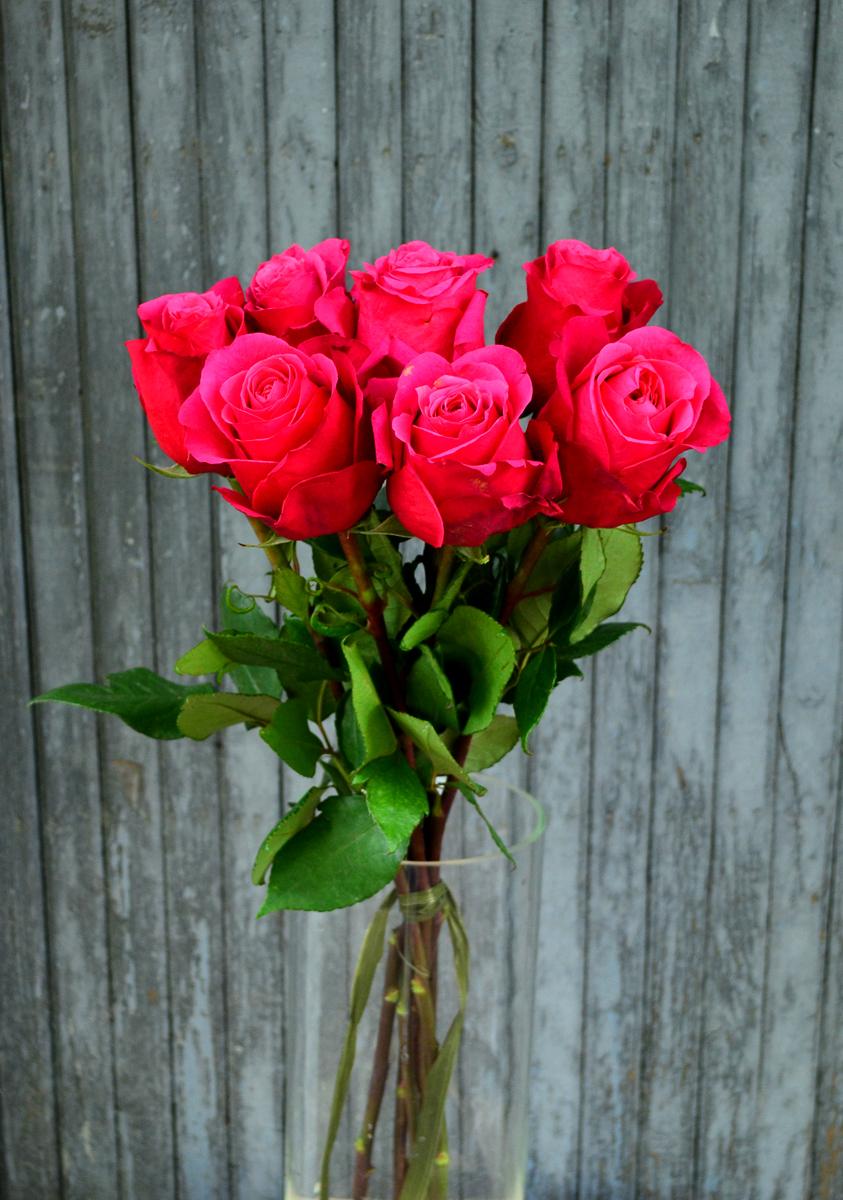 Розы (импорт), малиновые
