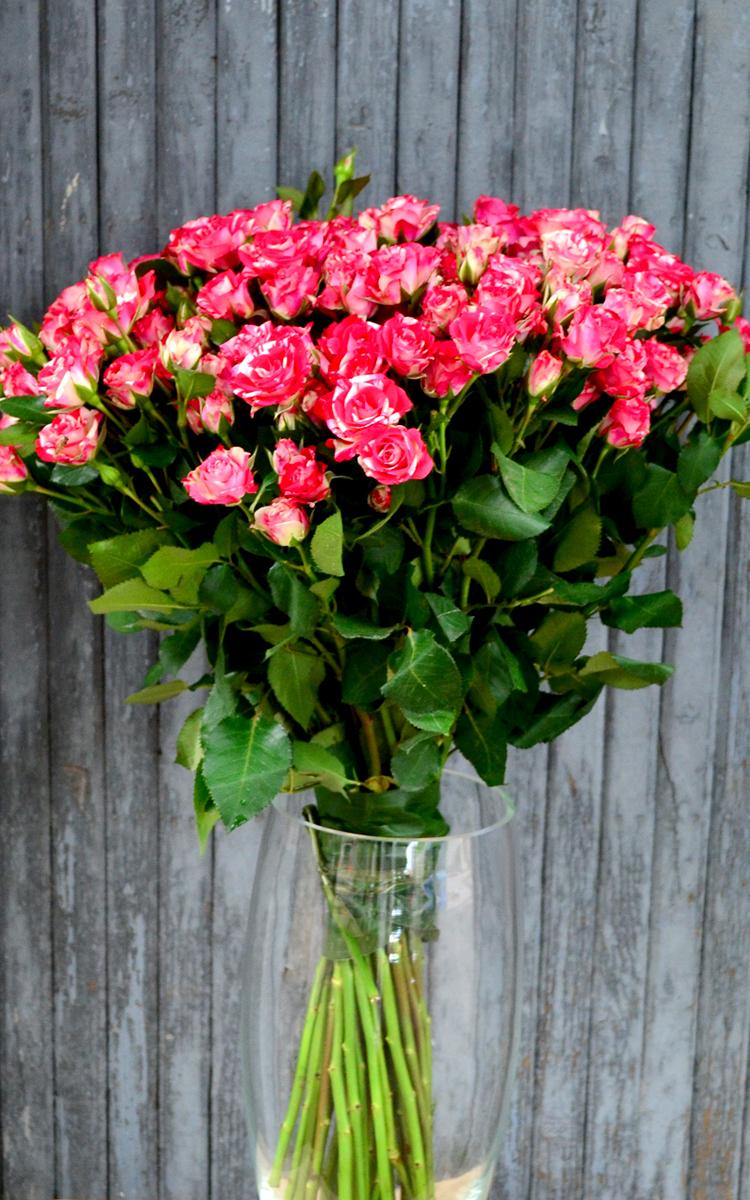Роза кустовая, в ассортименте