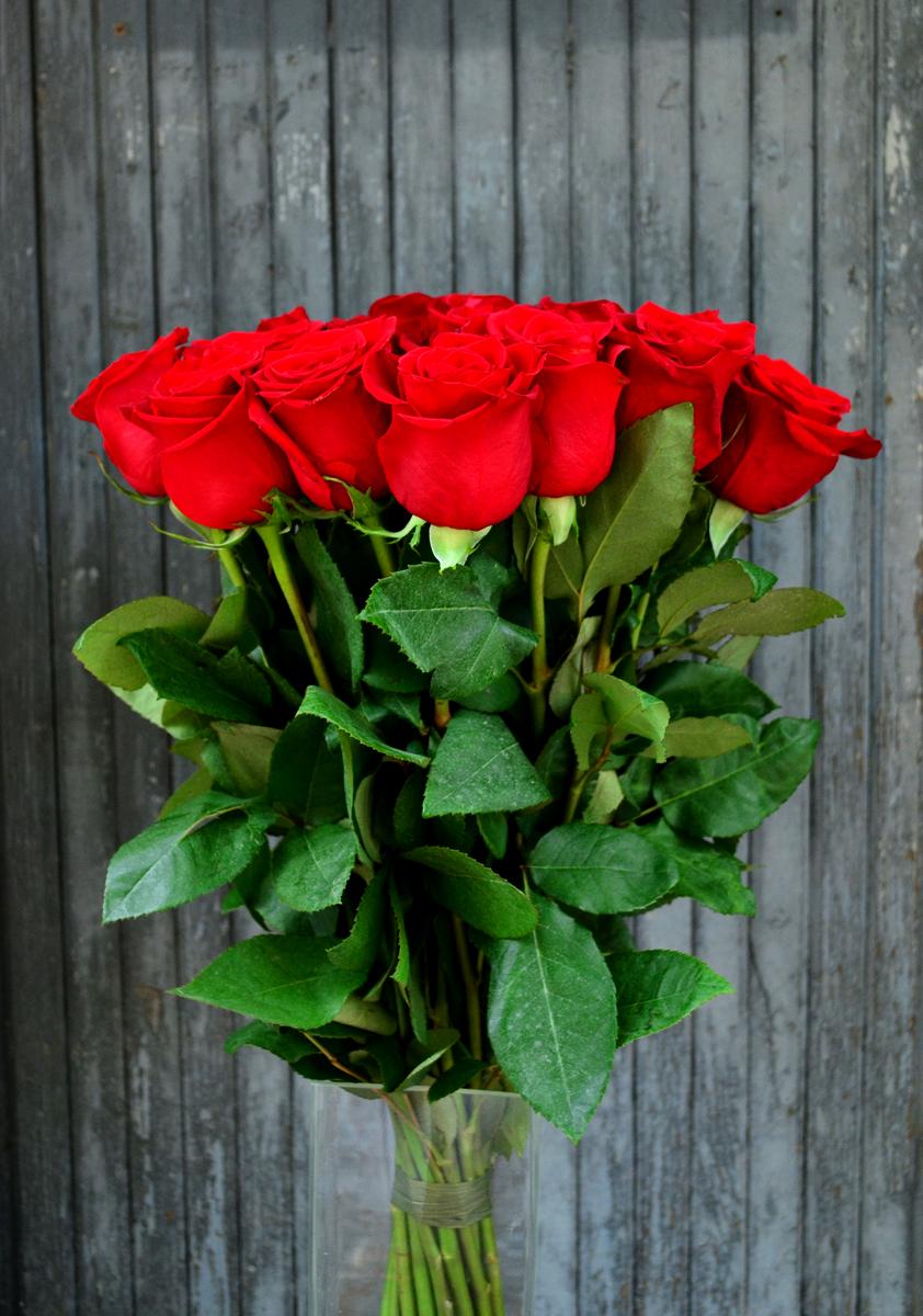 Розы (импорт), красные