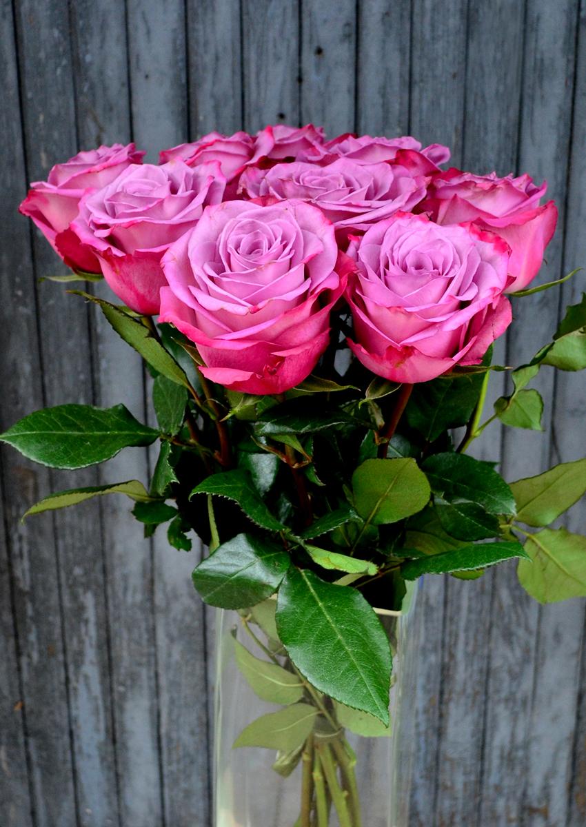 Розы (импорт), фиолетовые