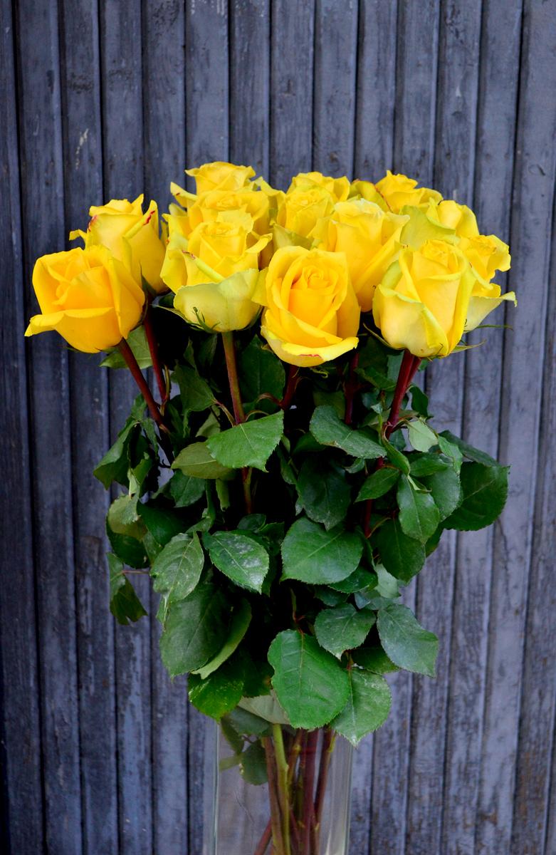 Розы (импорт) желтые